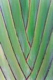 Podróżnicza palma Zdjęcia Royalty Free