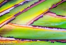 Podróżniczy palmowego liścia zakończenie obraz royalty free