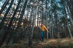 Podróżnik żółta kurtka chodzi przez sosnowego lasu fotografia stock