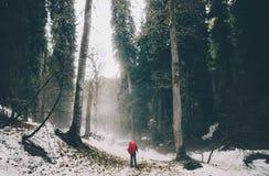 Podróżnik chodzi samotnie przy mgłowym lasem Obraz Stock