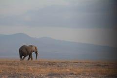 Podróżny słoń Zdjęcia Royalty Free