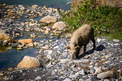 Podróżować w Kaukaskich górach Zdjęcie Royalty Free