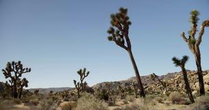 Podróżujący strzał suchy i hoy scenary z roślinami, krzakami i górami spiny, zdjęcie wideo