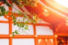 Podróży Japonia kultury słońca piękny światło przy Fushimi Inari świątynią Fushimi Inari Taisha Zdjęcia Stock