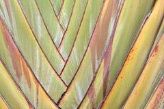 podróżniczy drzewo Fotografia Royalty Free