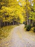 Podróż przez osik w Spadek Kolorado USA Zdjęcia Stock