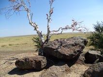 Podróż przez Rosja Otoczenia Orenburg Zdjęcia Royalty Free