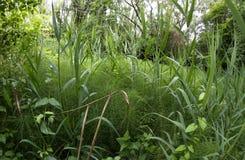 Podrównikowy tropikalny klimatu porośle z bardzo antycznymi roślinami zdjęcie royalty free