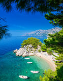 Podrace beach in Brela through pine trees Royalty Free Stock Images