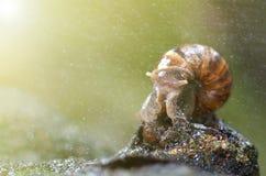 Podrożec lub ślimaczek czołgać się wolno w ogródzie Obraz Royalty Free