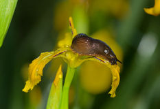Podrożec na kwiacie Zdjęcia Stock