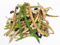 Pods and beans Stock Photography