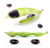 Pods and beans Royalty Free Stock Photo