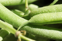 Pods of green beans Royalty Free Stock Image