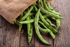 Pods of green beans Stock Image