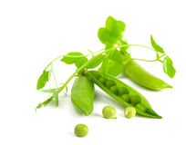 Pods of green peas Stock Photo