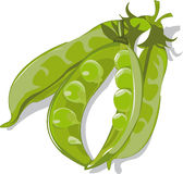 Pods of green peas Royalty Free Stock Photography