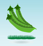Pods of green peas. Grass concept royalty free illustration