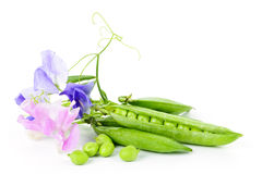 Pods of peas and sweet pea flowers Stock Image