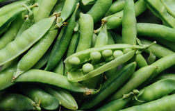 Pods of ripe fresh peas Royalty Free Stock Photography