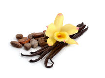 Pods of vanilla and cocoa beans with one yellow orchid. Royalty Free Stock Images