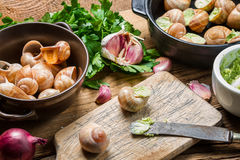 Podsadzkowi ślimaczki z czosnku masłem i świeżymi ziele Fotografia Royalty Free