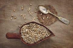 Podslnuha dei semi di girasole e del cucchiaio d'argento su tessuto homespun Fotografia Stock