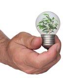 podstawowy żarówki dorośnięcia światła drzewo Obraz Royalty Free