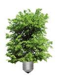 podstawowy żarówki dorośnięcia światła drzewo Obraz Stock