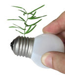 podstawowy żarówki dorośnięcia światło podstawowy kiełkuje Zdjęcie Stock