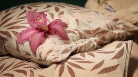 poduszka z kwiatem na nim zbiory