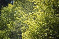 Podwórko drzewa blanches w świetle słonecznym fotografia royalty free