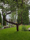 Podwórka drzewo Obrazy Stock