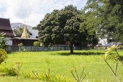 Podwórka krajobraz Zdjęcia Royalty Free