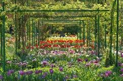 Podwórka ogród Zdjęcie Royalty Free