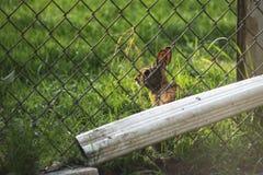 Podwórko Kraść wiosna królika zdjęcia royalty free