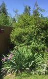Podwórko ogrodowe byliny zdjęcie royalty free
