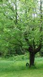 podwórko opony huśtawki wiosna w Pennsylwania Zdjęcie Royalty Free