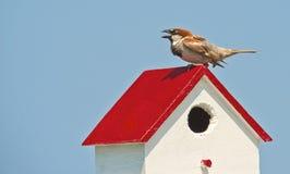 podwórza birdhouse finch umieszczał obrazy stock