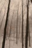podwórze mgła Obrazy Royalty Free