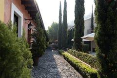 Podwórze z zielonymi roślinami i kolorowymi ścianami zdjęcia stock