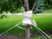 Podwiązka młody drzewo z dratwą ochraniać przeciw wykorzeniać obraz stock