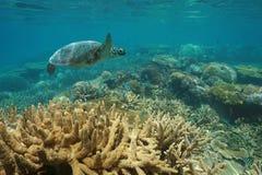 Podwodna dennego żółwia zdrowa rafa koralowa z ryba obrazy royalty free