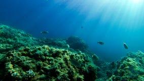 Podwodna eksploracja w raj wyspie fotografia stock