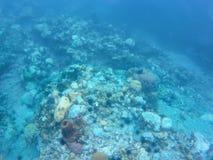 Podwodna fotografia nabierająca Karaiby fotografia stock