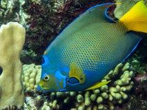 Podwodna rafa koralowa Obraz Royalty Free