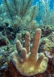Podwodna rafa koralowa Fotografia Royalty Free