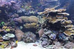 Podwodna rafa koralowa Zdjęcia Royalty Free