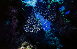 Podwodna rafa koralowa w otwartej jamie Fotografia Stock