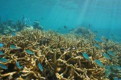 Podwodna rafy koralowa ryba Tahiti Francuski Polynesia Zdjęcie Royalty Free
